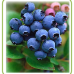 wholefood-blueberries